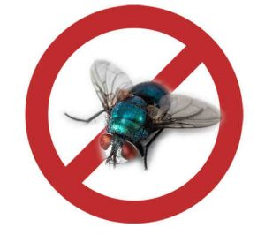 prevent bugs in jupiter with crazylegs pest control