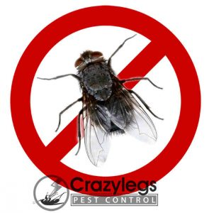 prevent bugs in kissimmee with crazylegs pest control