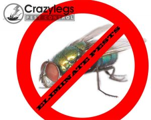 prevent bugs in ocala with crazylegs pest control