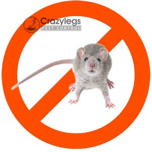 prevent bugs in orlando with crazylegs pest control