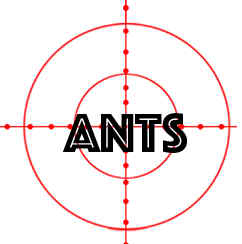 prevent ants in palm coast