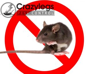 prevent bugs in port orange with crazylegs pest control