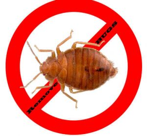 prevent bugs in port st lucie with crazylegs pest control