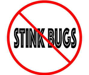 prevent stink bugs in bloomington mn with crazylegs pest control