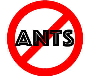 prevent ants in chicago with crazylegs pest control