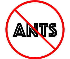 prevent ants in coon rapids mn with crazylegs pest control