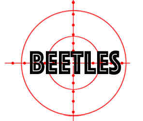 remove beetles in eau clair wi with crazylegs pest control
