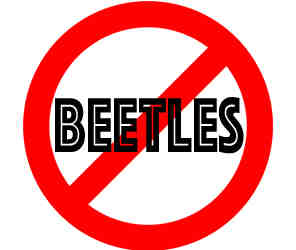 prevent beetles in la crosse wi with crazylegs pest control