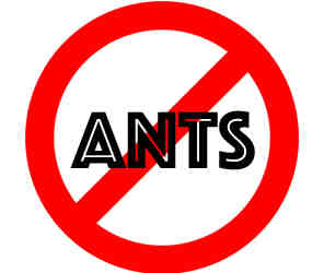 crazylegs pest control removes ants in madison WI