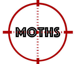 prevent moths in maple grove mn with crazylegs pest control