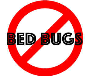 remove bedbugs in Naperville with crazylegs pest control