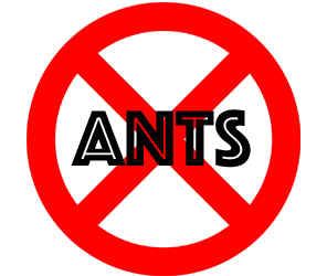 prevent ants in plymouth mn with crazylegs pest control
