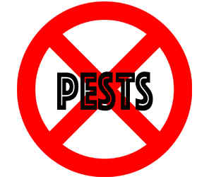 prevent pests in st paul mn with crazylegs pest control