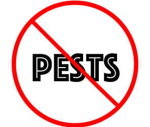 prevent pests in woodbury mn with crazylegs pest control