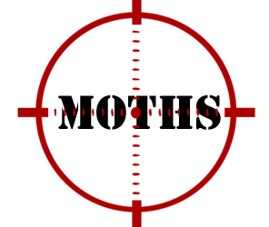 prevent moths in ann arbor mi