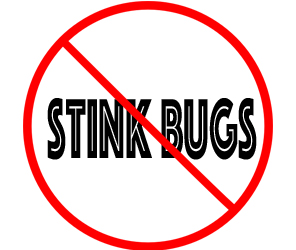 prevent stinkbugs in dearborn with crazylegs pest control