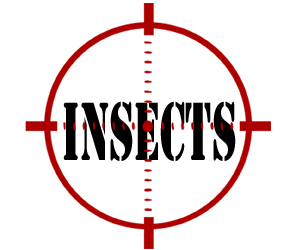 protect your home or business from insects in flint with crazylegs pest control