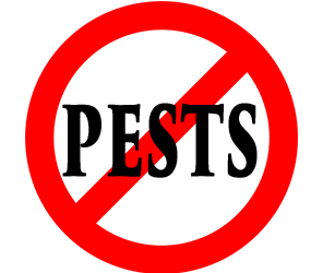 protect your home in kokomo in from pests with crazylegs pest control