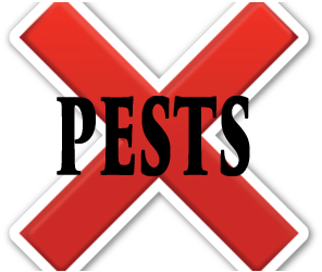 protect your home in laafayette in from pests with crazylegs pest control