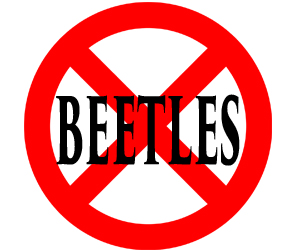 protect your home from beetles in levittown with crazylegs pest control