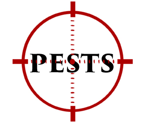protect your home in owensboro in from pests with crazylegs pest control