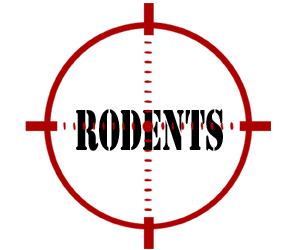 prevent rodents in pontiac with crazylegs pest control