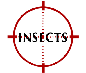protect your home from insects in reading with crazylegs pest control
