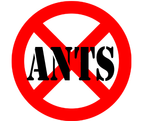 prevent ants in west bloomfield township with crazylegs pest control