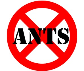 prevent ants in youngstown oh with crazylegs pest control