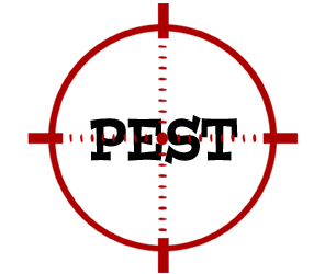 prevent pests in cheektowanga with crazylegs pest control