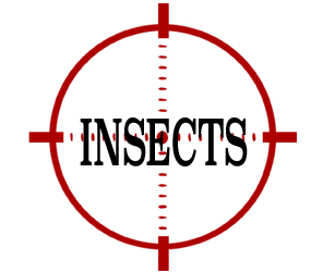 prevent insects in elizabeth with crazylegs pest control