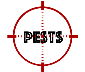 protect your home from pests with crazylegs pest control