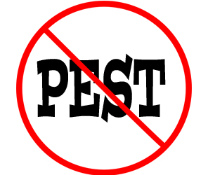 prevent pest with crazylegs pest control