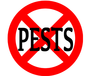 prevent pests in parsippany-troy hills with crazylegs pest control