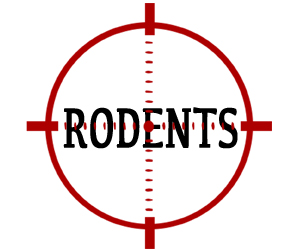 prevent rodents in patterson with crazylegs pest control