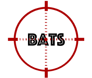 prevent bats in southhampton with crazylegs pest control