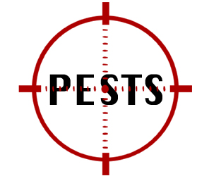 prevent pests in toms river with crazylegs pest control