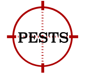 prevent pests in vineland with crazylegs pest control