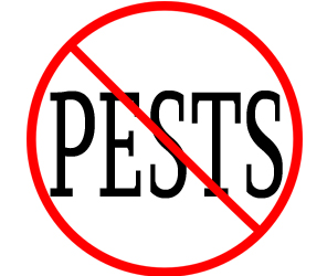 eliminate pests in fairfield with crazylegs pest control
