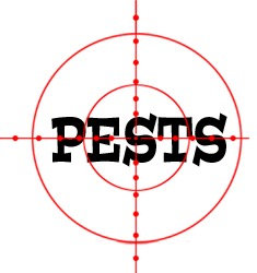 prevent insects in hampton with crazylegs pest control