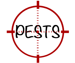 prevent pests in lowell with crazylegs pest control