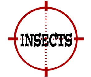 prevent insects in lynchburg with crazylegs pest control