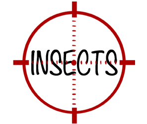 prevent insects in malden with crazylegs pest control