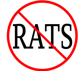 eliminate rats in manchester with crazylegs pest control