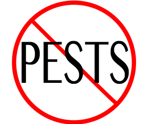 eliminate pests in new bedford with crazylegs pest control