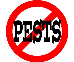 prevent insects in newport news with crazylegs pest control