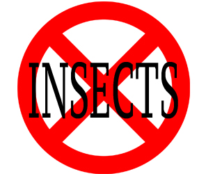 eliminate insects in norwalk with crazylegs pest control