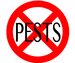 eliminate pests in plymouth with crazylegs pest control