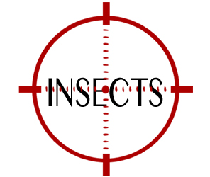 eliminate insects in springfield with crazylegs pest control