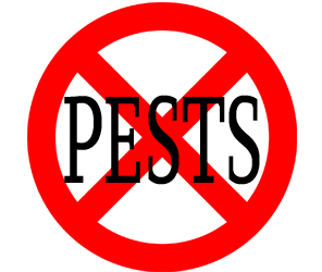 eliminate pests in stratford with crazylegs pest control